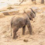 Fotografieren Lernen im Zoo