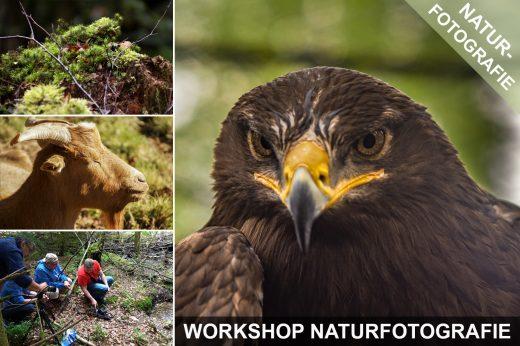 Fotoworkshop Naturfotografie