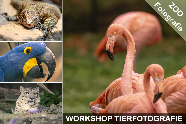 Fotoworkshop Tiere im Zoo