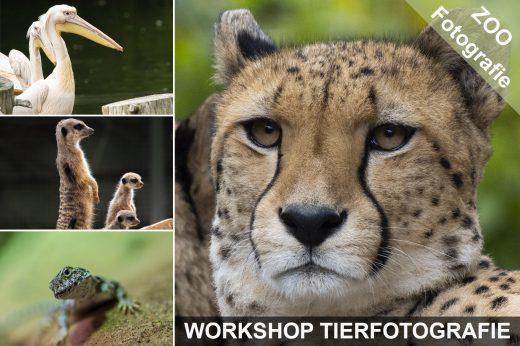 Titelbild zum Workshop Tierfotografie