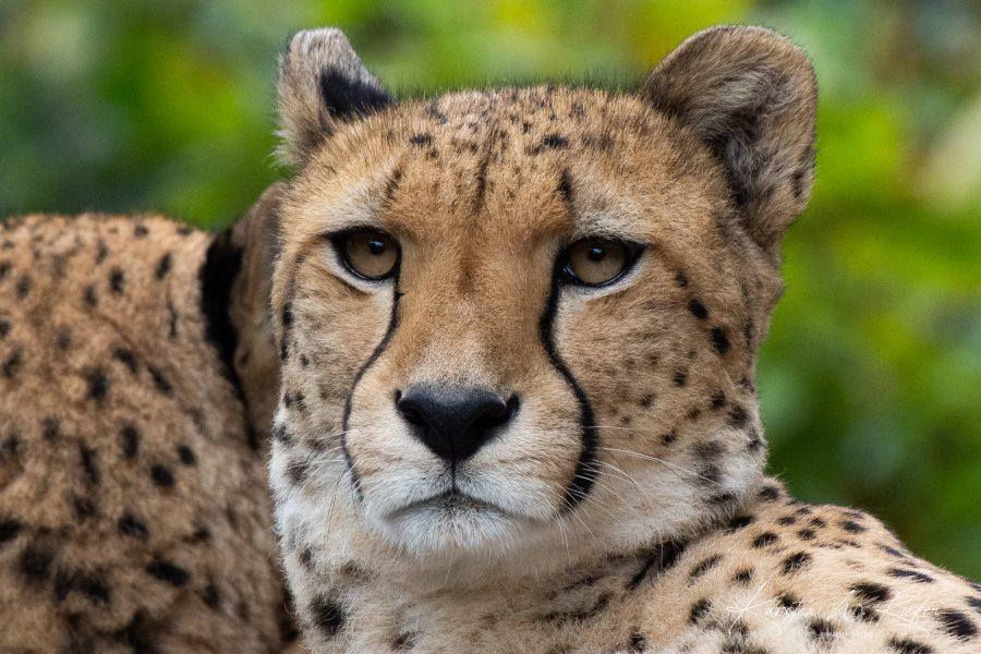 Fotografieren lernen: Ein Besuch im Kölner Zoo