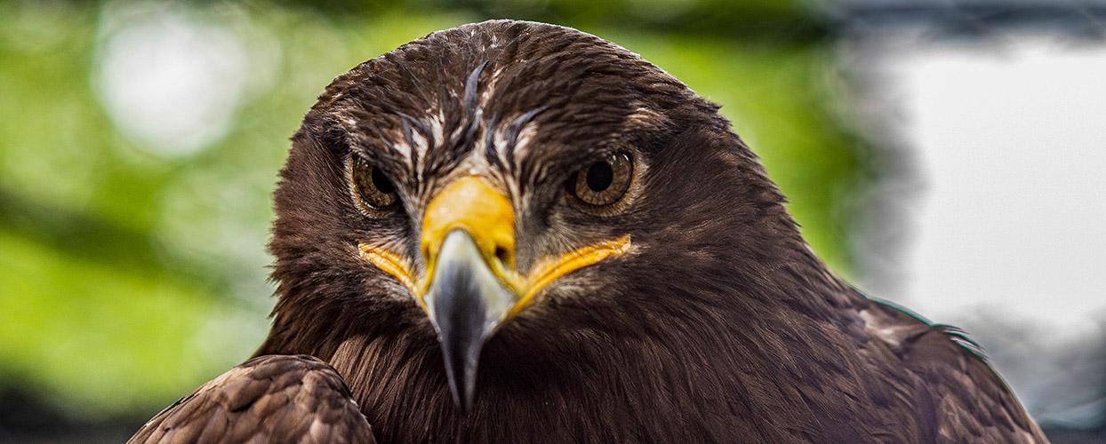 Bild eines Adlers entstanden bei einem Fotokurs im Saarland